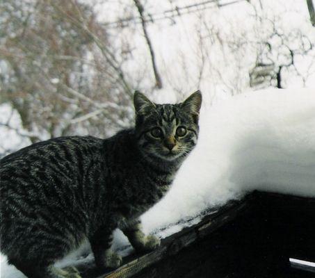 Rintintin, so diese Katze