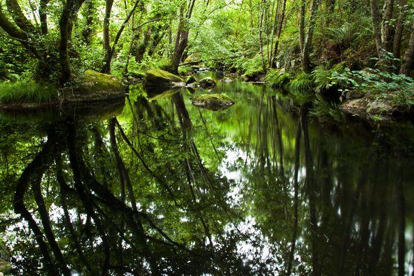 Río Asma Chantada. En donde el sonido se hace silencio: Para mi amiga Adriana Prieto.
