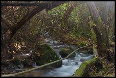 Río Majaceite II