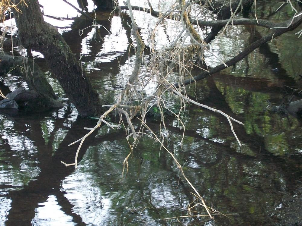 Rio Miño (Galicia)