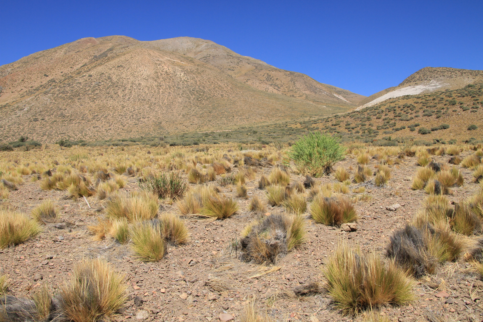Rio Salado (Provinz Mendoza/Argentinien)
