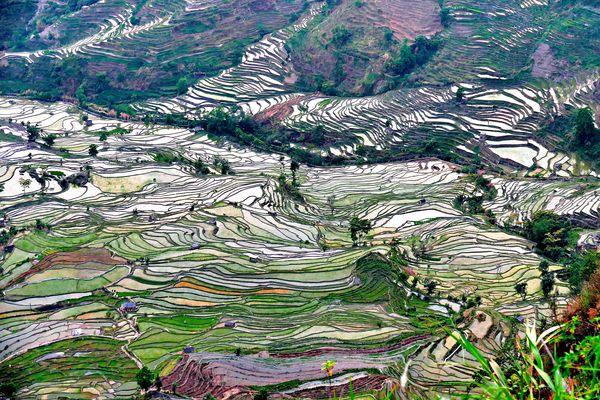 Risaie a terrazza (Yunnan-Cina)