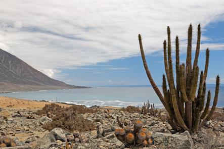 Rivage au bord du désert d'Atacama
