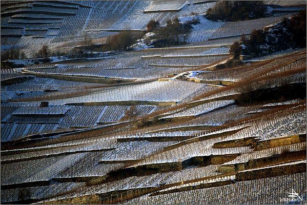 Rive droite du Rhône en hiver