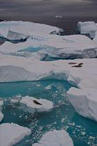 Rive ouest de Petermann Island, péninsule Antarctique