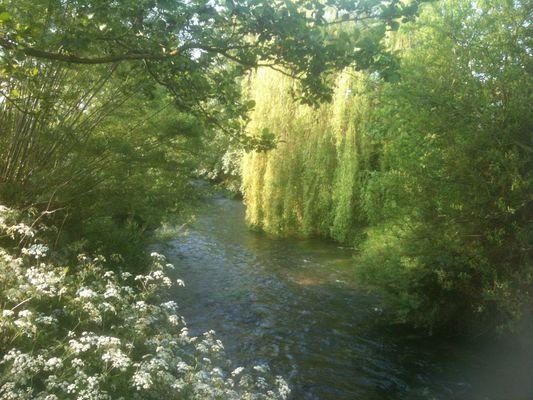 rivière et la nature