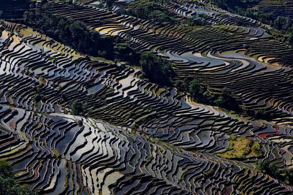 Rivières en terrace de Yuanyang, Yunnan, Chine.