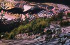 rizières en terrasses 3