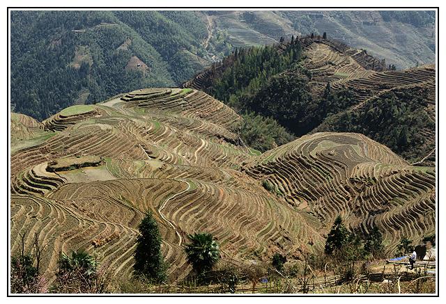 Rizieres en terrasses de longji