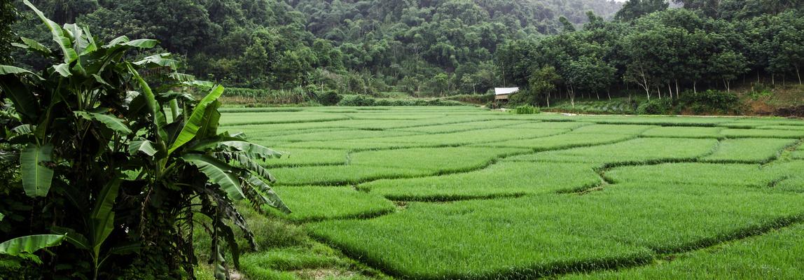Rizières sud Yunnan