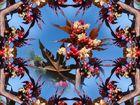 Rizinus Kaleidoskop