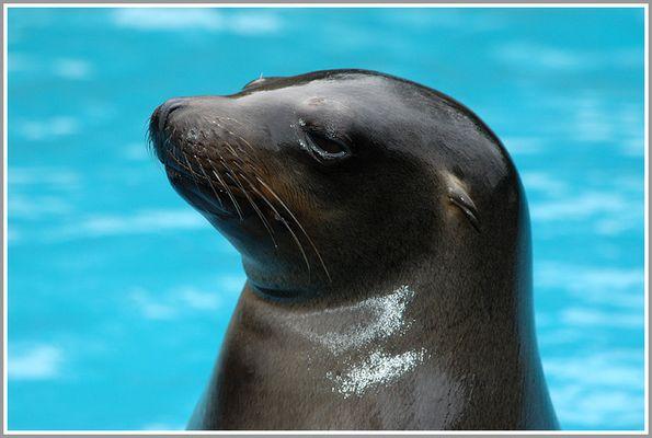 Robbe im Zoo Duisburg