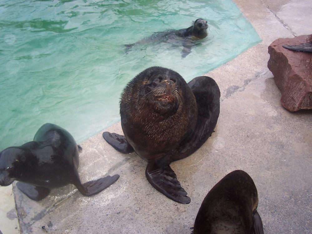 Robben im Zoo