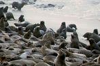 Robben-Kuscheln