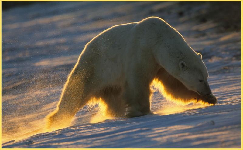 Robbenfängers Leid