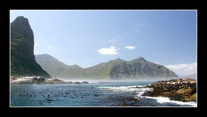 Robbeninsel in der Nähe von Kapstadt