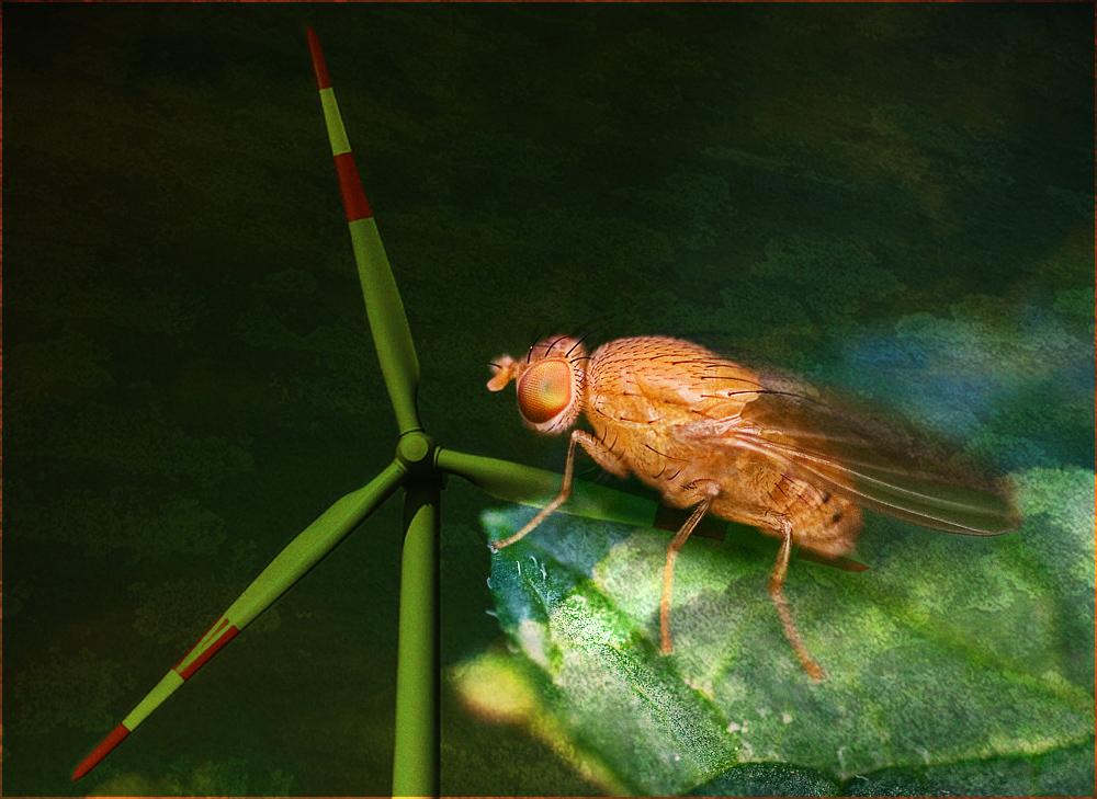 Robin the fly ;-)))