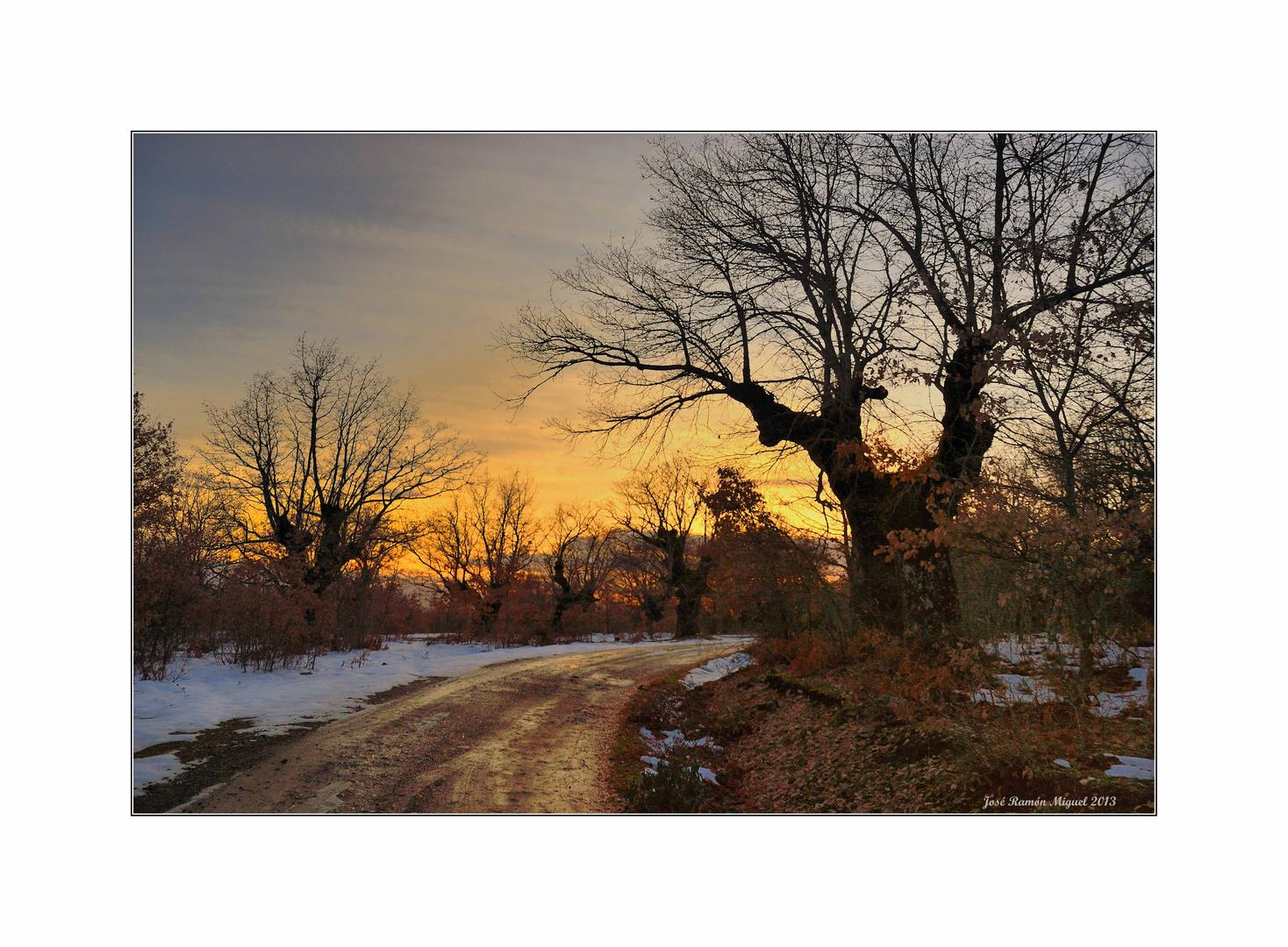 Robles en invierno. 3