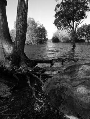 Roca, árbol, agua.