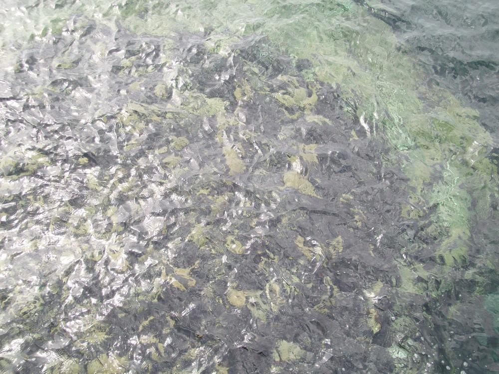 Roca Bajo El Agua (Illa de Ons -Galicia-)