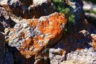 Roca deliciosa