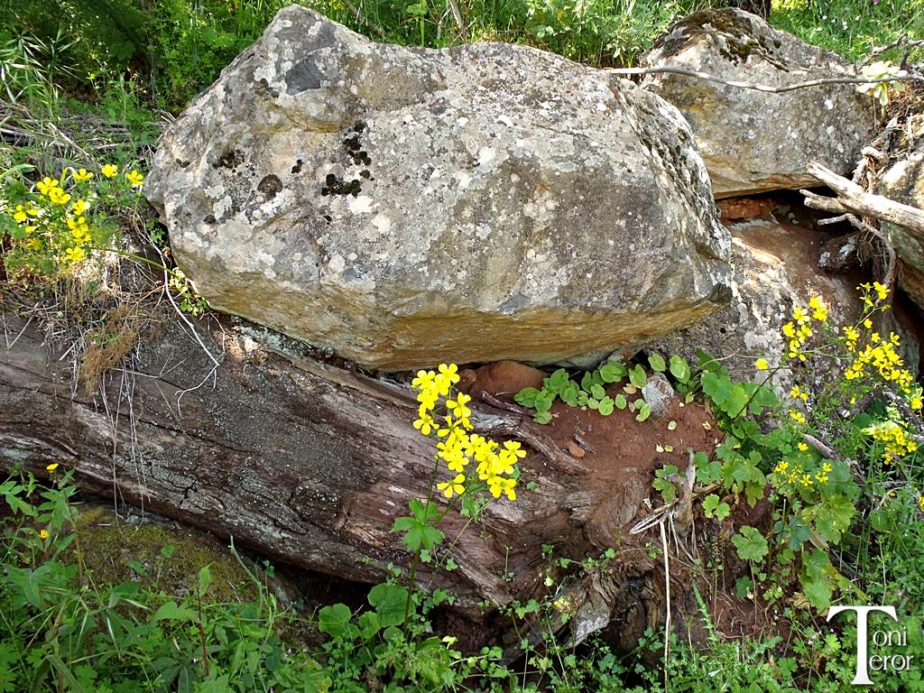 Roca sobre un tronco