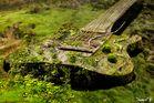 Rock im Urwald