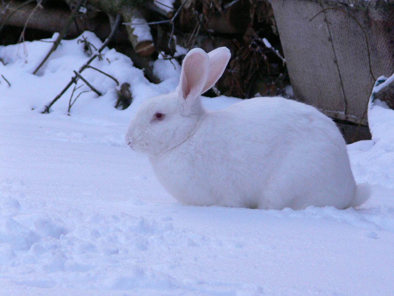 Rocky im Schnee