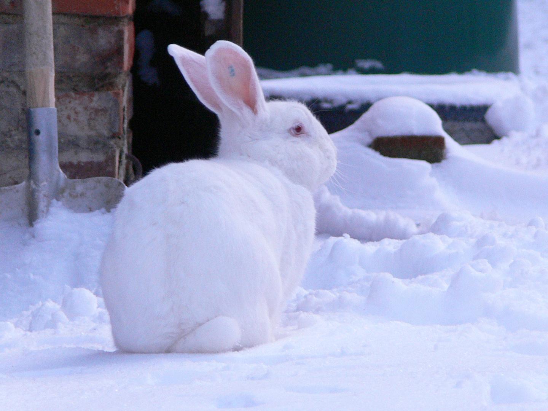 Rocky im Schnee_2