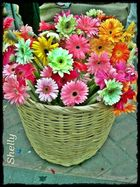Rodeándome de flores
