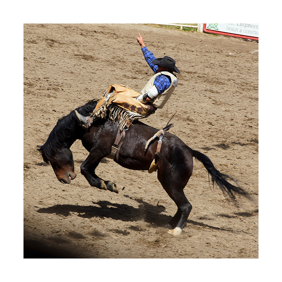 ...rodeo**...