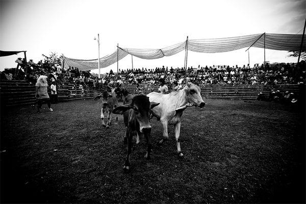 Rodeo a Lascano (Ecuador)