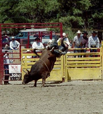 Rodeo - der Cowboy fällt