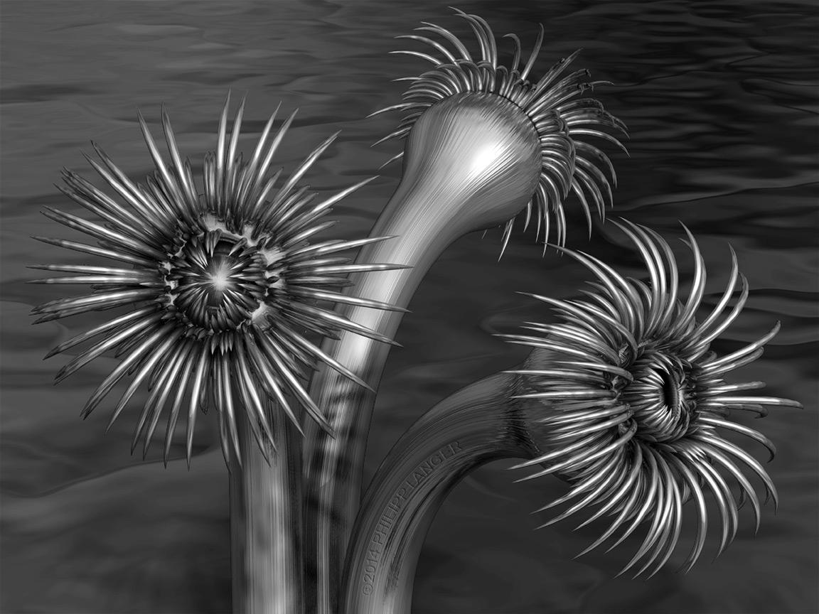 Röhrenwürmer I