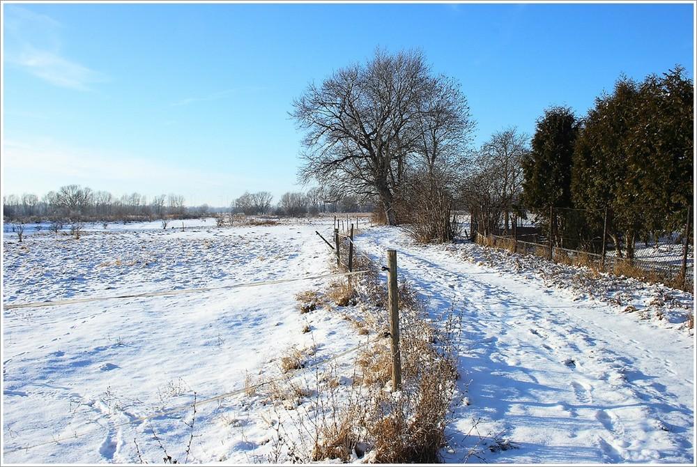 Röpziger Saaleaue (Winterimpressionen 1)