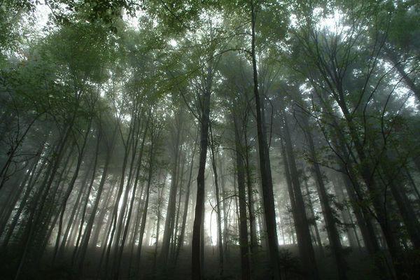 Rohstoff Wald