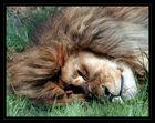 roi endormi