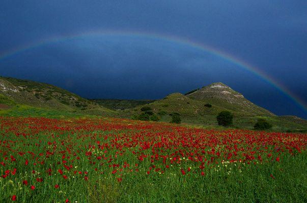 Rojo bajo el arco iris
