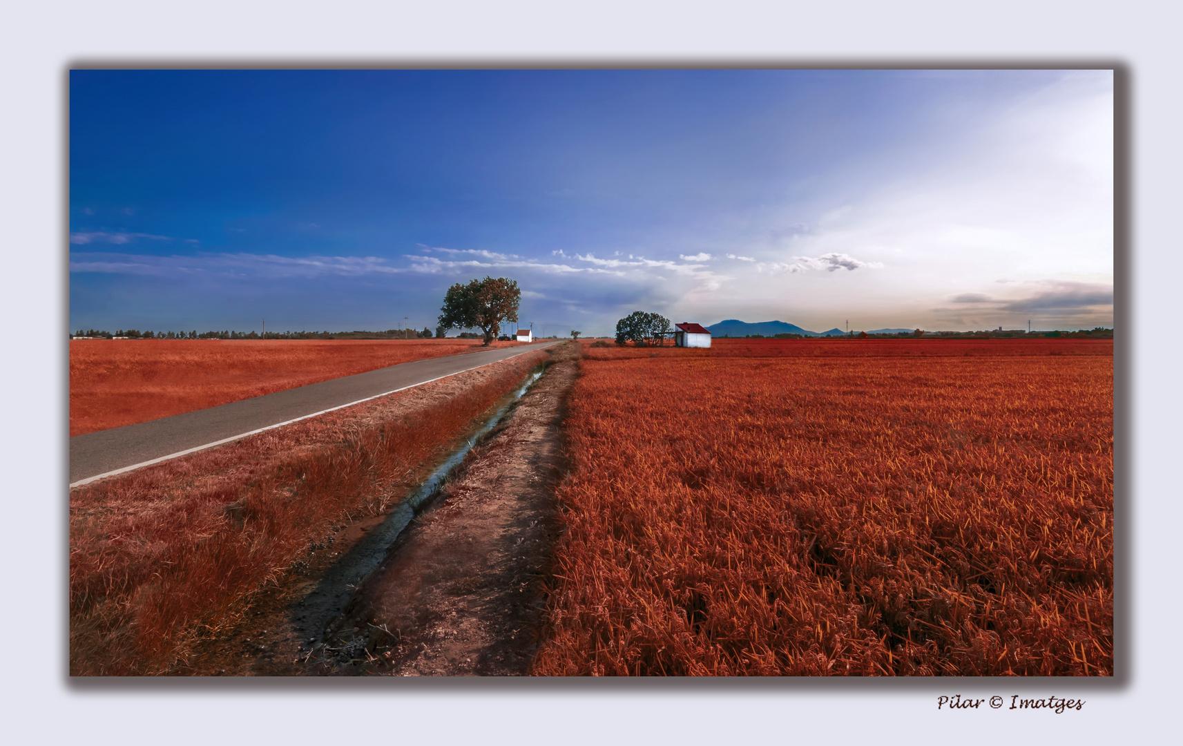 Rojo de Vida