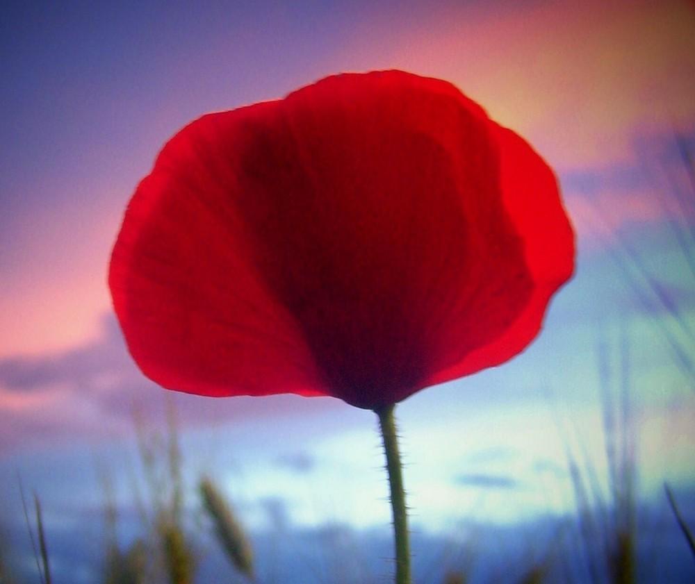 Rojo intenso...FERNANDO LÓPEZ   fOTOGRAFÍAS...