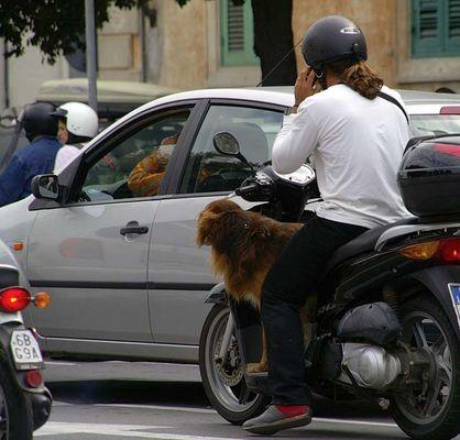 Roller, Handy & Hund