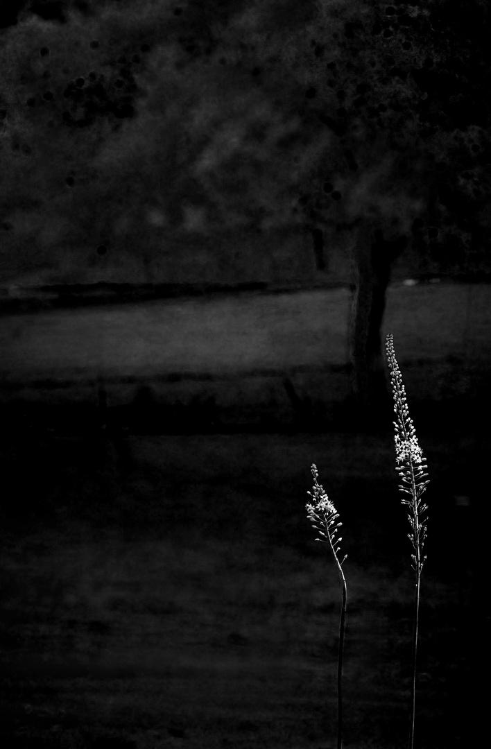 romance in darkness