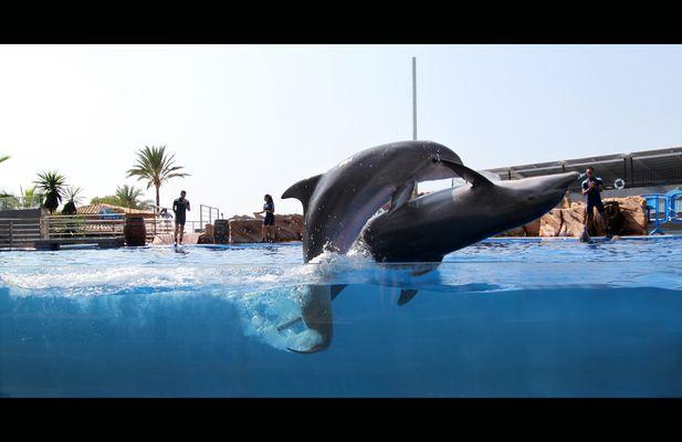 romancing dolphins in Marineland - Mallorca