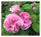 Romantic Flower Circus