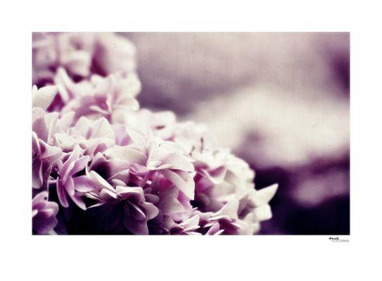 .romantic flowers.