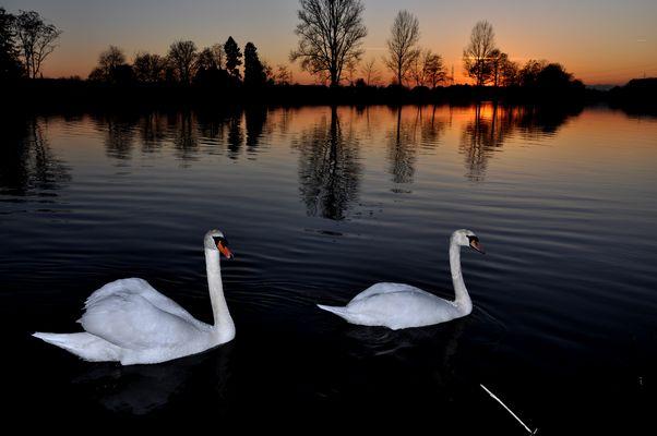Romantik an der Aare