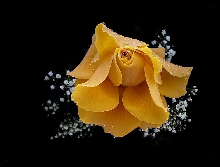 Romantik-Star
