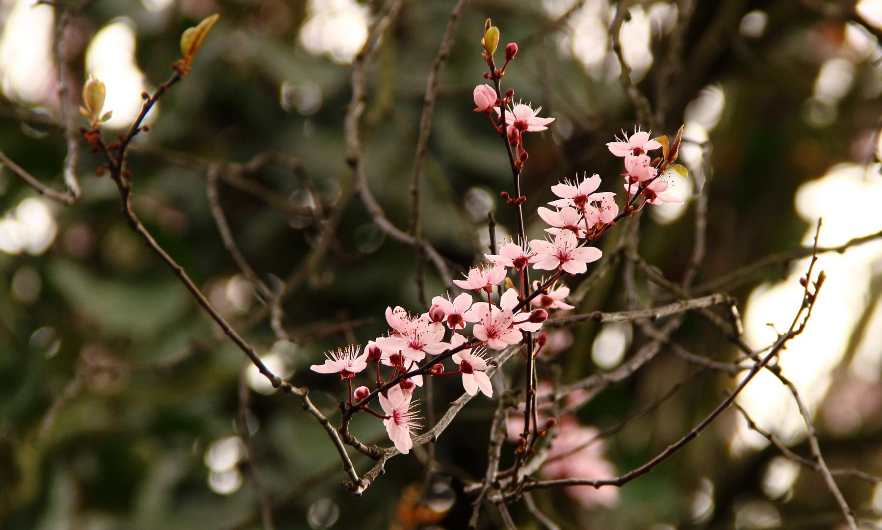 ...romantischer Frühlingsnachmittag!