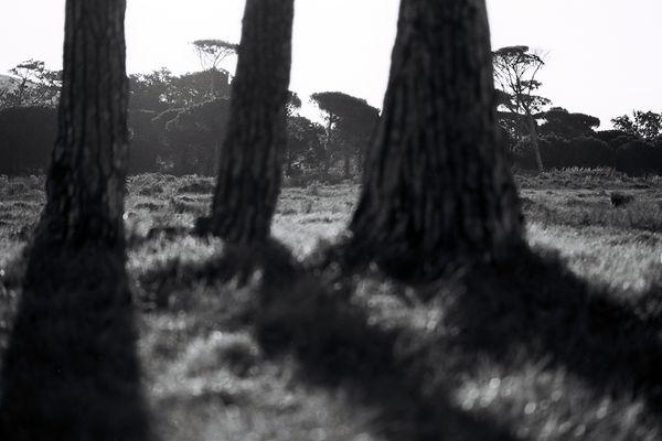 Rondebosch common