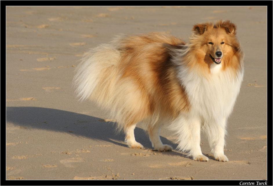 ~ Ronja am Strand ~